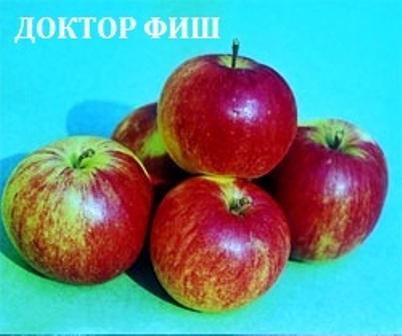 Сорта яблонь раннелетние